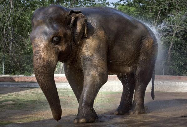 Kaavan elephant cher